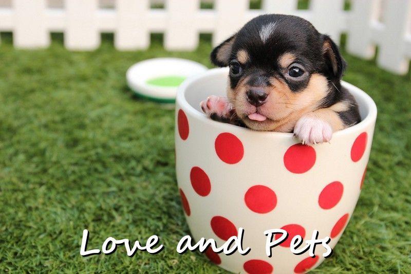 Cute In A Cup